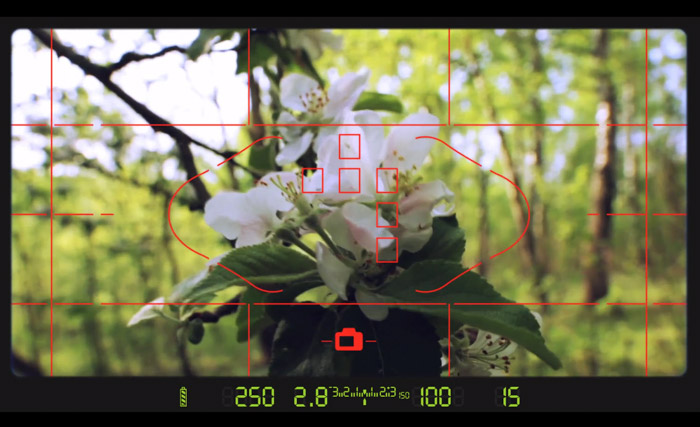 Image of a camera screen interface showing a white flower. How to Use a Light Meter