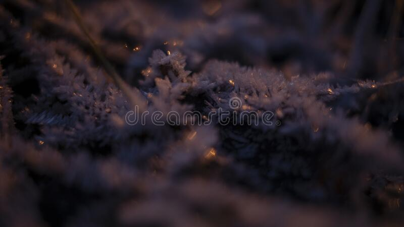 Frozen grass with purple and orange lighting on. Frozen icy snow grass at night with purple and orange lighting on royalty free stock photography