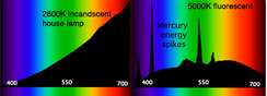 Characteristic spectral power distributions (SPDs) for an incandescent lamp (left) and a CFL (right). The horizontal axes are in nanometers and the vertical axes show relative intensity in arbitrary units. Significant peaks of UV light are present for CFL even if not visible